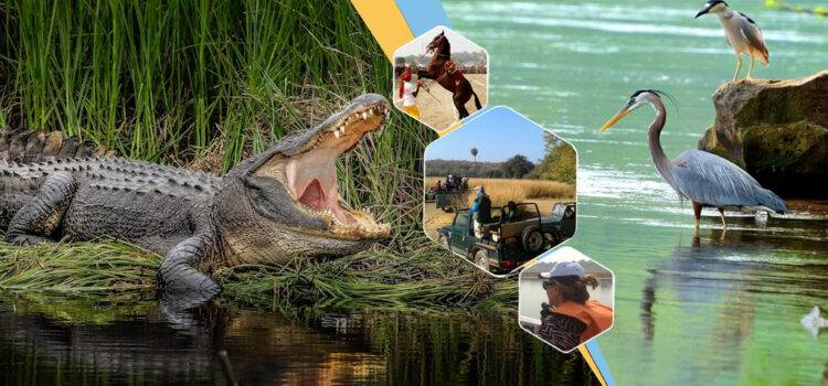 Chambal Wildlife Sanctuary Same Day Tour From Agra